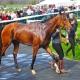 Horse Post Race