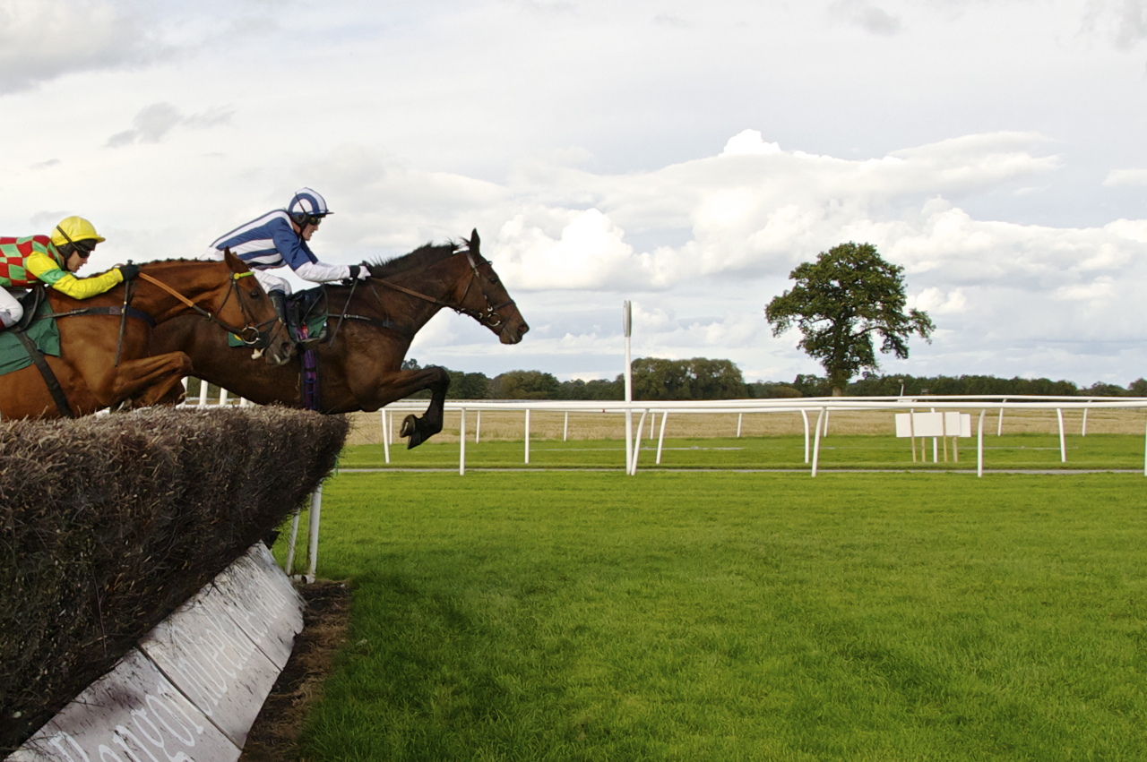 horses in steeplechase horse racing photos