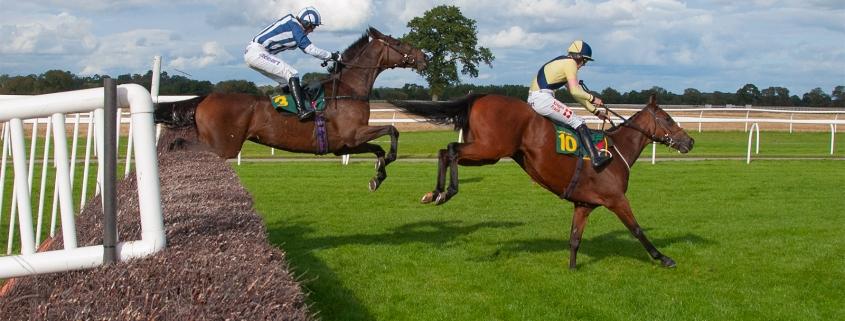 Horses Jumping